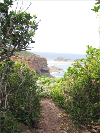 Fynbos vegetation grows near the Nelson Bay Cave archaeological site on the Robberg Peninsula.