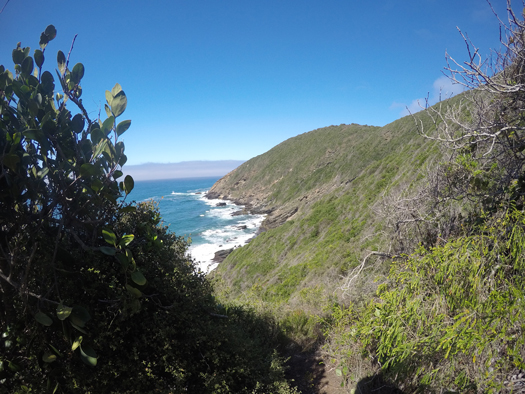 Fynbos vegetation grows on South Africa's central south coast near the city of George.