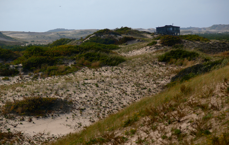 A stilted home rises above grassy sand dunes.