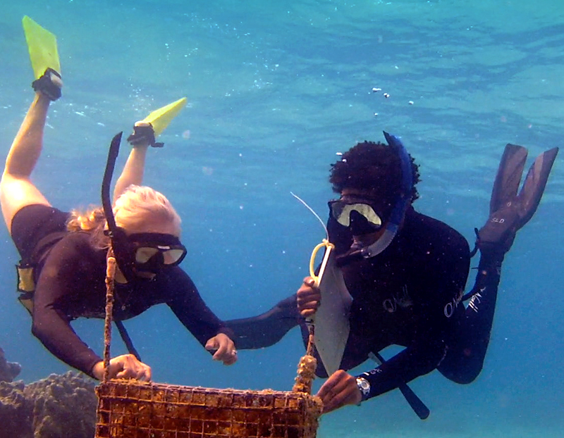 The author and a researcher inspect an underwater cage protecting large macroalgae off the coast of Moorea, Tahiti