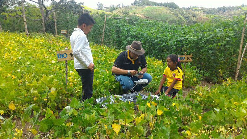 Children and an adult plant bean plants in a small agricultural enclosure in Los Cerrillos, Colombia.