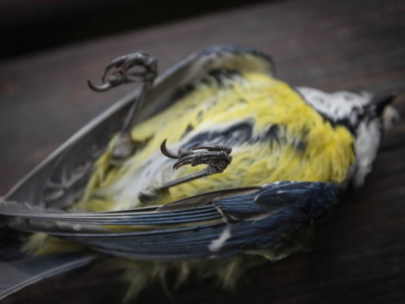 mass_bird_die_off-800x600.jpg