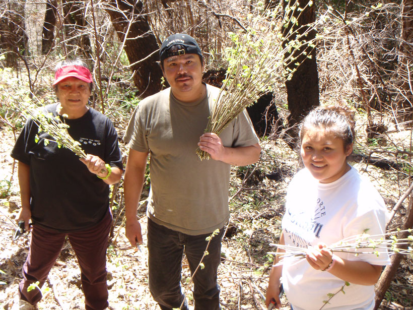 A mother, son, and granddaughter of the Yurok tribe gather hazelnut basketry stems at a cultural burn site near Weitchpec, Calif.