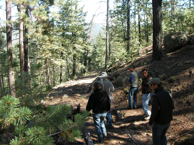 Chris Toya and scientists walk along an ancient trail in the forested Jemez Mountains.