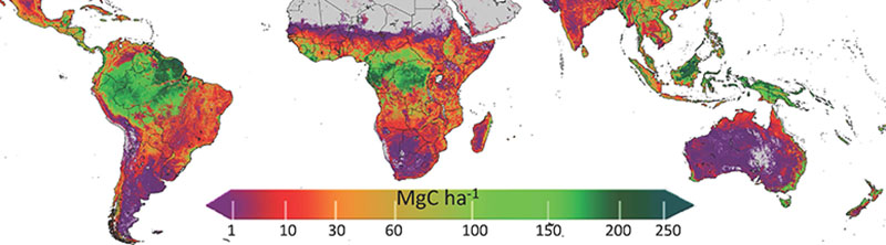Distribution of above ground live biomass carbon density and uncertainty