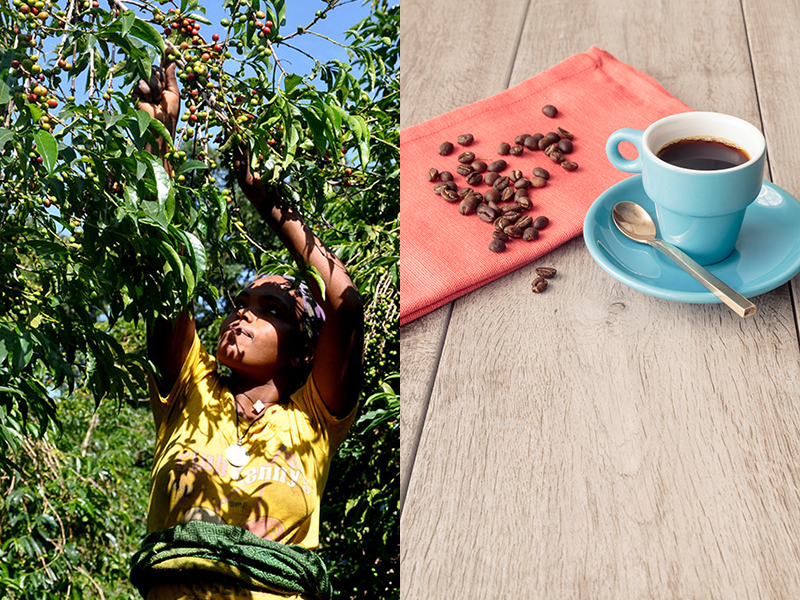 A woman reaching up to a coffee plant