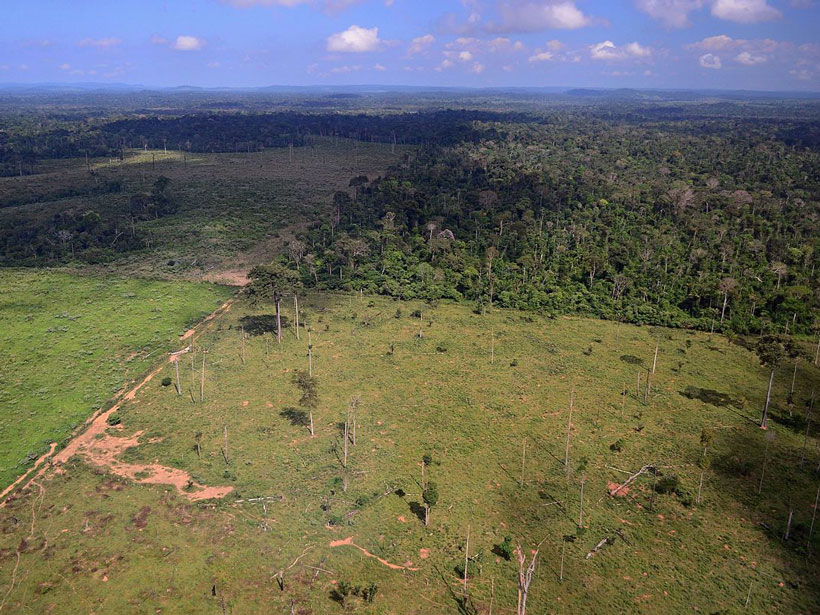 A bird's-eye view of cleared plots of rain forest, with green grass and scattered dead tree stumps, next to untouched rain forest dense with trees.