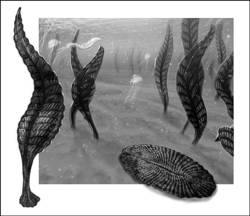 Black-and-white illustration of early marine creatures on the seafloor
