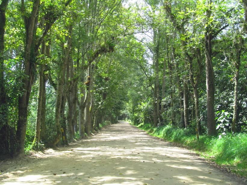 Árboles alineados en un camino con sombra en un bosque urbano el Bogotá