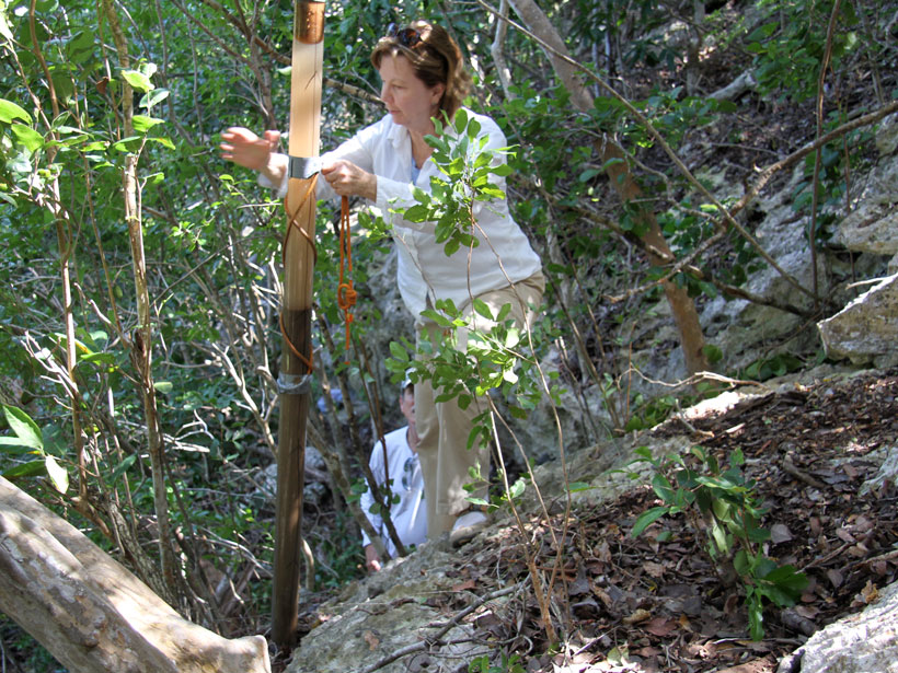 Earth scientist Patricia Fall extracts a sediment core from a sinkhole in the Bahamas.