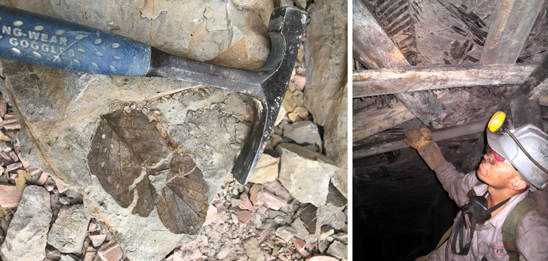 (Left) Mónica Carvalho's pick and a fossilized leaf in Colombia; (right) Mauricio Gutiérrez collecting Maastrichtian fossils in a coal mine in Cundinamarca