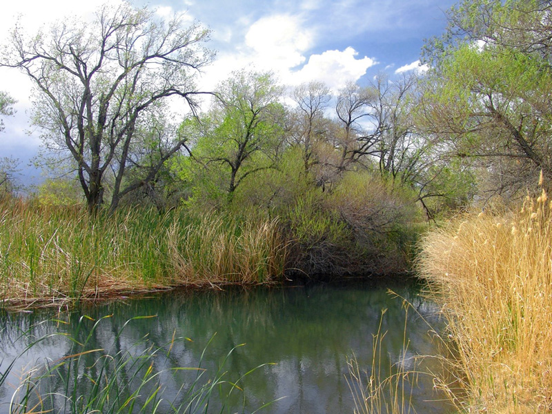 A blue pool surrounded by rushes and trees