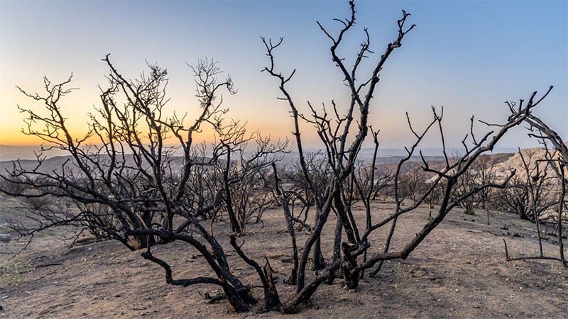Devil's Punchbowl area in California burned during the 2020 Bobcat Fire.