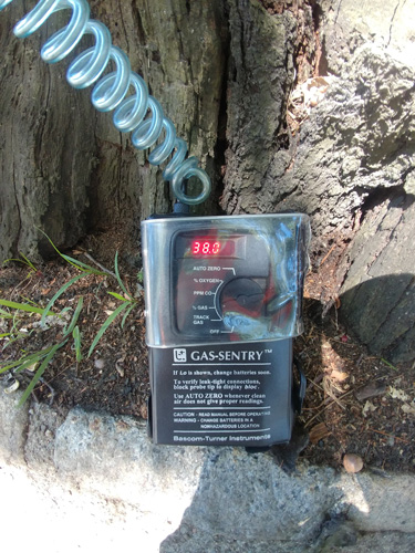 """A rectangular black instrument labeled """"Gas-Sentry™"""" connected to a spiral cord leading out of frame nestles at the trunk of a tree. On the box, a window displays """"38.0"""" in glowing red."""