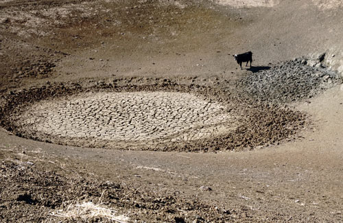 A cow stands on bare ground near a dry watering hole.