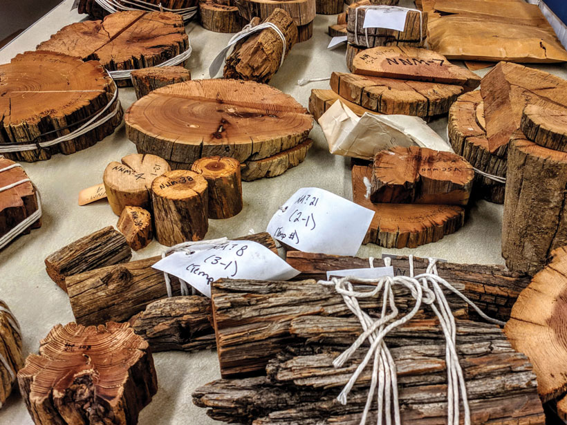Wood samples in stacks or bundled with twine are spread across a surface.