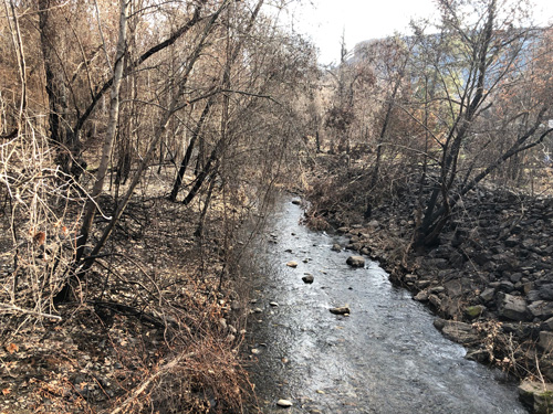Burned trees line the banks of a creek.