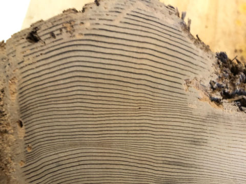 Close up of a cross section from a tree showing numerous tree rings