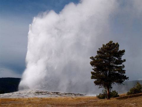 The Old Faithful geyser erupts in Yellowstone National Park.