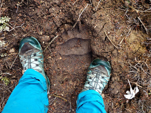 The author's feet pictured next to a large bear track pressed into fresh mud.