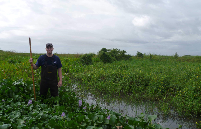 Andrew Moodie stands in wetland plants in the Mississippi River Delta.